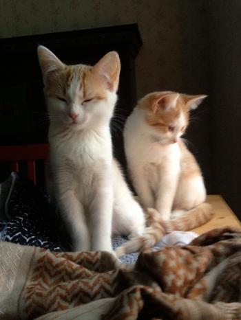 katt_A